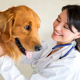 cuidados-paliativos-veterinaria